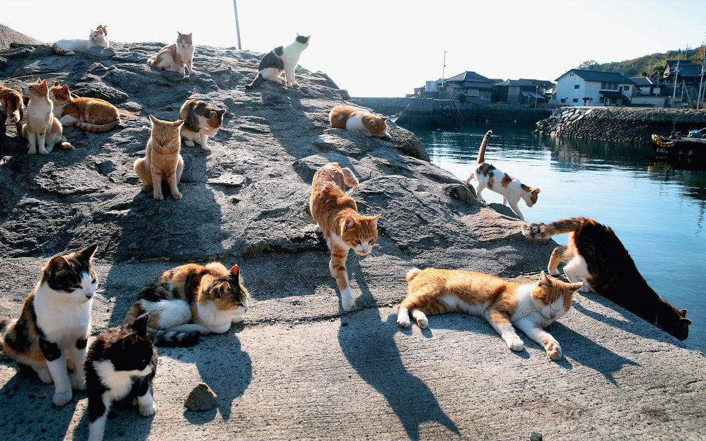 pulau kucing pahang